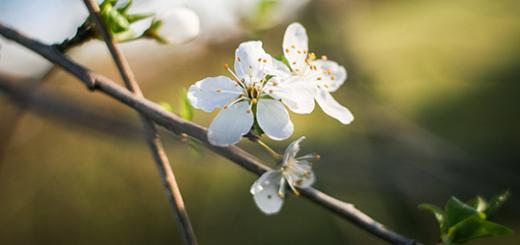 kwiaty-mini